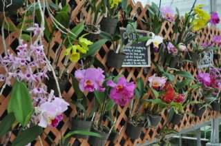 Why Our Hawaii Akatsuka Orchid Gardens Tours